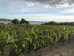 Winery Kovac