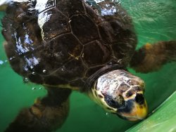 The Kaptan June Sea Turtle Conservation Foundation