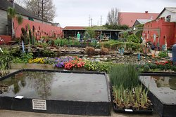 American Aquatic Gardens and Gifts