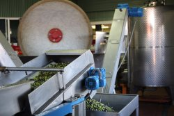 Our Dry Creek Olive Co. Olive Oils are milled with love at our estate.