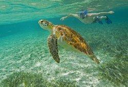 Belize Parasail Plus