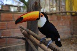 Parque de las Aves Agroflori