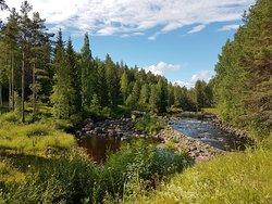 Wildlife Sweden-Camp Ängra