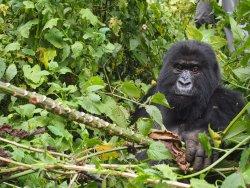 AA Tours Rwanda
