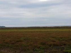 Salvikens strandangar