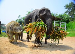 Elephant Retirement Park Phuket