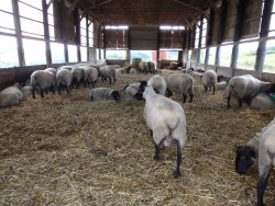 World Sheep Museum