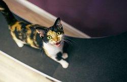 Feline Good Cat Cafe