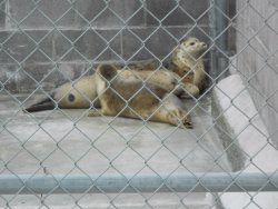 Northcoast Marine Mammal Center