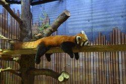 Ishikawa Zoo