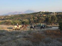 Horsefarm Melanouri