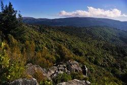 Mount Cargill Walk