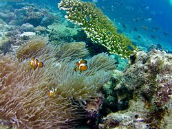 Krabi Nice Sea