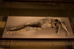 Museo della Cripta - Le Mummie di Monsampolo