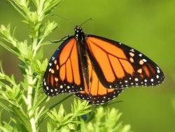Urquhart Butterfly Garden