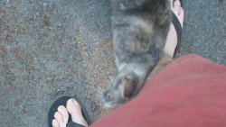 stray cat that hung around one morning