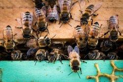 The Tasmanian Honey Company