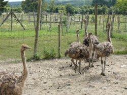 Doneu Ostrich Farm