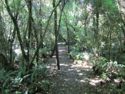 Peel Forest Park Scenic Reserve