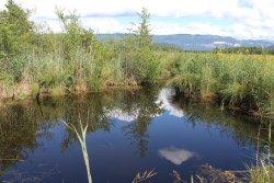 Réserve Naturelle du Marais de Lavours
