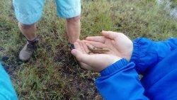 Discover wildlife on a Turf Bog Tour