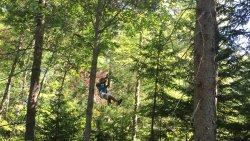 TreeGO - Moncton