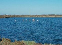 Bahía de Cádiz Natural Park
