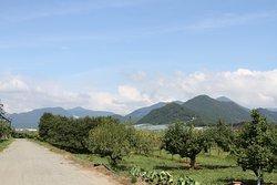 Osho Orchard