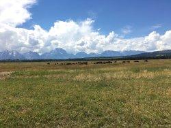 Yellowstone/ Jackson Hole Family Vacation