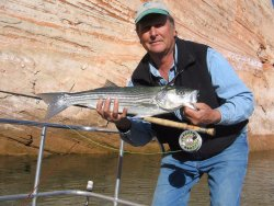 Ambassador Guides Lake Powell Striper Fishing