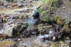 Oasi WWF Monte Polveracchio