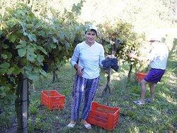 Agriturismo Bosco della Luja