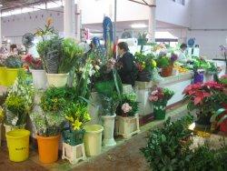 Vila de Santo Antonio Municipal Market