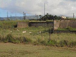 Old Kaloa Sugar Mill