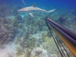 Key West Spearfishing Trip With Finz Dive Center