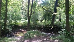 Wenchford Picnic Site