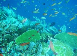 Batu Bolong Reef