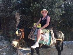 Donkey Trips on Paros