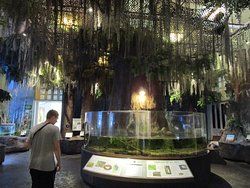 奥杜邦昆虫博物馆