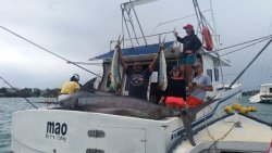 Our recent catch a Black of more than 400kgs
