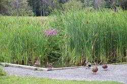 Parc Botanique a Fleur D'Eau