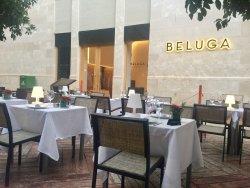 Beluga Málaga