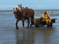 Paardevissers in Oostduinkerke
