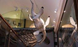 Lyme Regis Philpot Museum