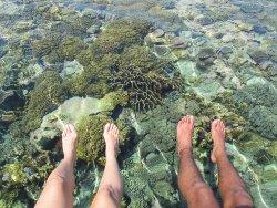 Wakatobi Dive Trip