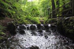 water stream in Summerhill Glen