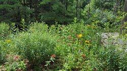 Macbride Nature Recreation Area