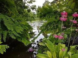 Longstock Water Gardens