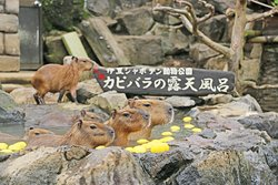 Izu Shaboten Animal Park