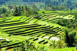 Bali Purana